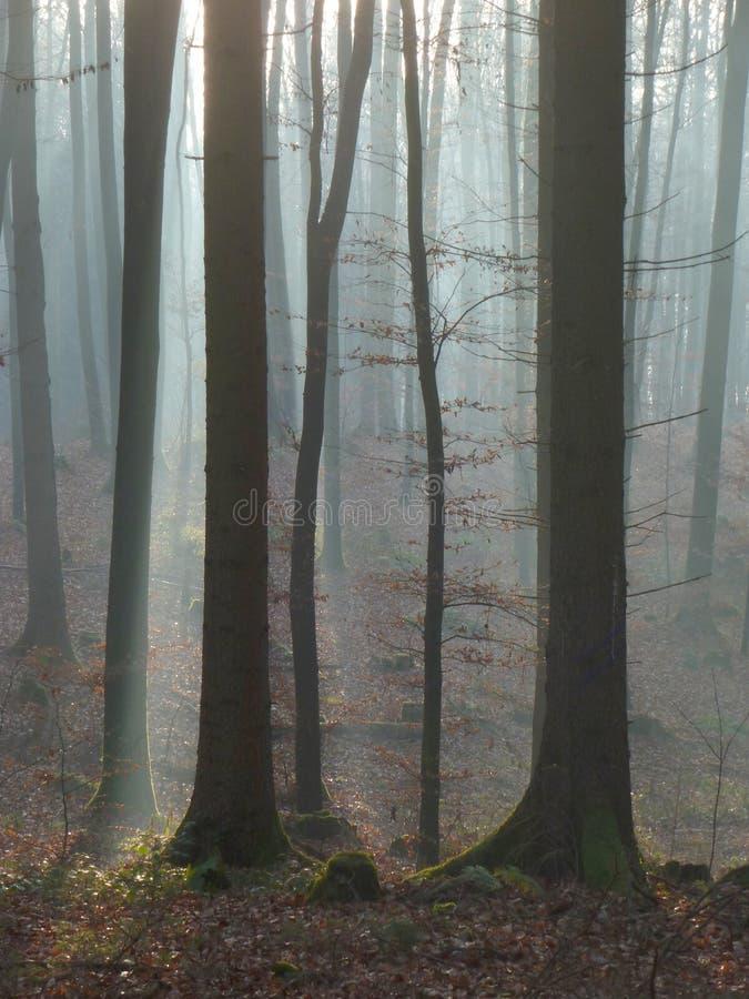 Δάσος 12 στοκ εικόνες με δικαίωμα ελεύθερης χρήσης