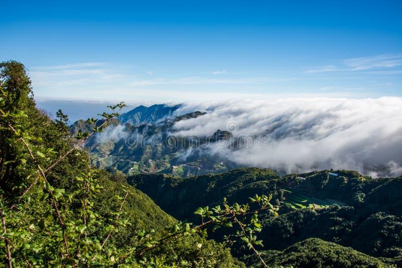 Δάσος Anaga Tenerife στο νησί, Κανάρια νησιά, Ισπανία στοκ φωτογραφίες