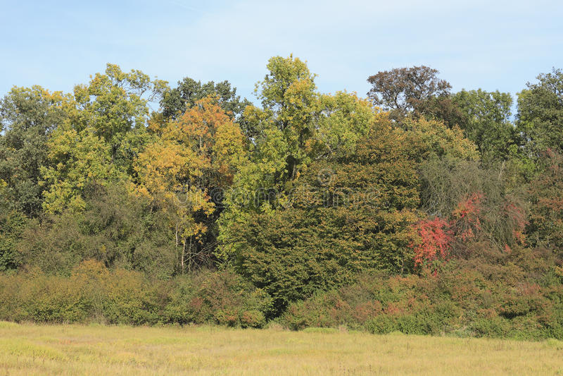 Δάσος Autmn στοκ εικόνα