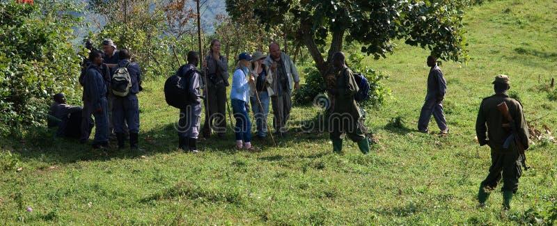 δάσος bwindi στοκ εικόνες με δικαίωμα ελεύθερης χρήσης