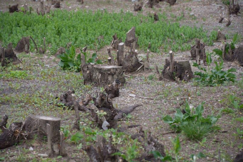 Δάσος Cutted στοκ φωτογραφία