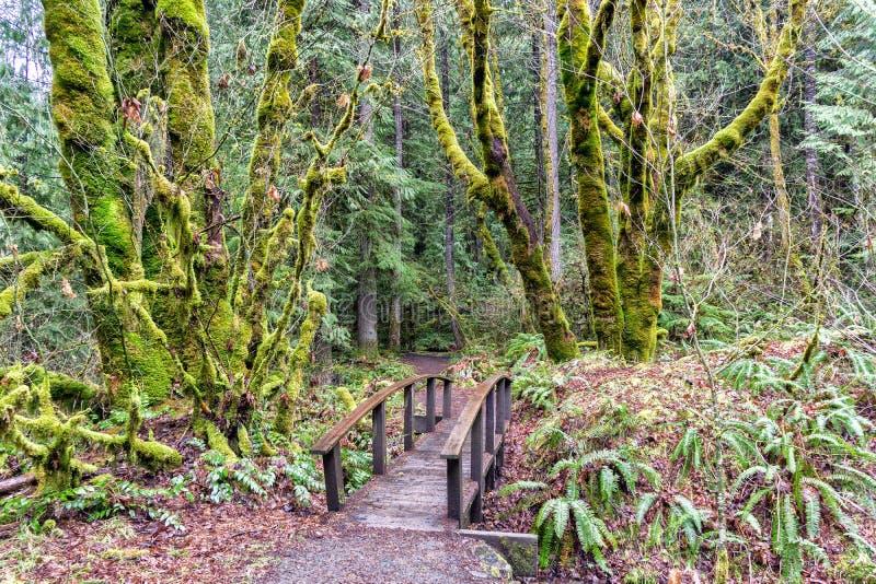 Δάσος Enchanted με καλυμμένα τα βρύο δέντρα - νοτιοδυτικό Όρεγκον, Pacific Northwest στοκ φωτογραφία