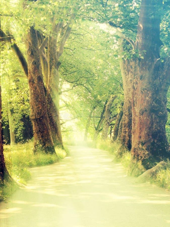Δάσος Enchanted με τις ακτίνες ήλιων