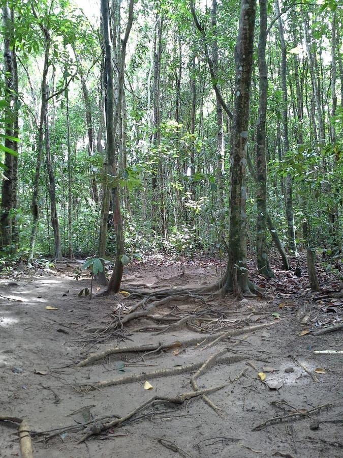 Δάσος, Hadyai Songkhla, Ταϊλάνδη στοκ φωτογραφίες