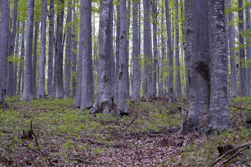 Δάσος Hornbeam - 03 στοκ εικόνες