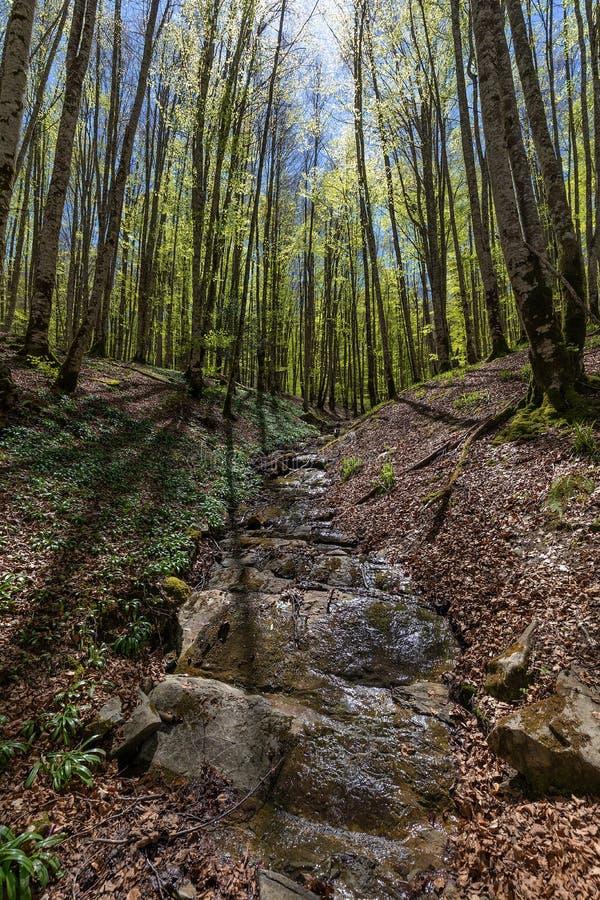 Δάσος Irati σε μια ηλιόλουστη ημέρα άνοιξη στοκ φωτογραφία