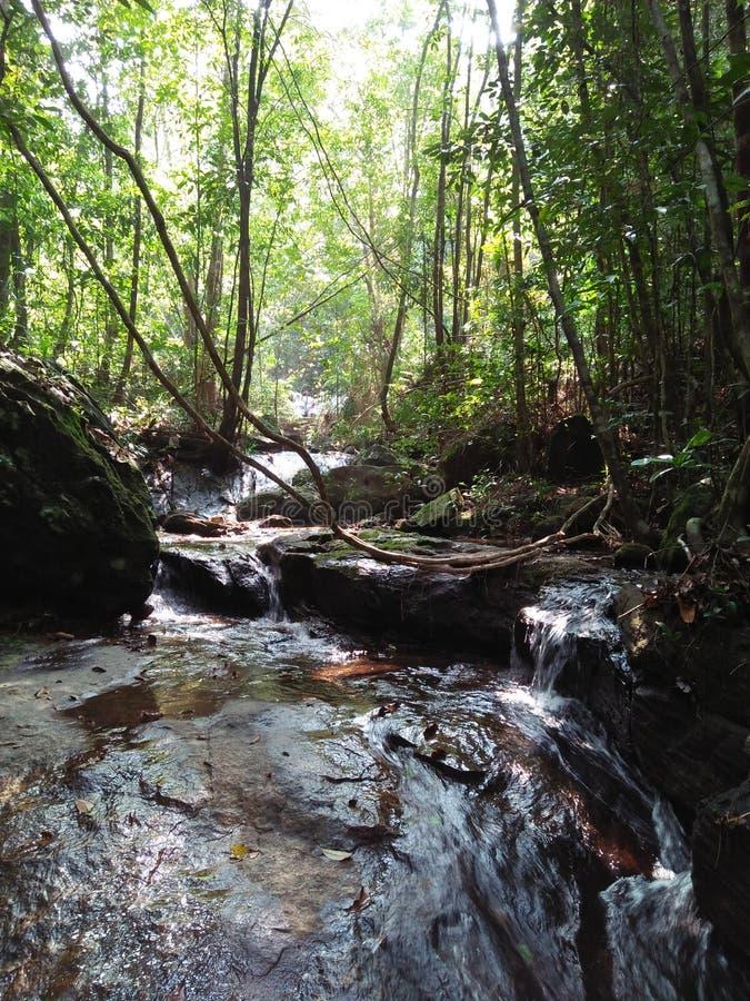 Δάσος Kanneliya στοκ φωτογραφίες με δικαίωμα ελεύθερης χρήσης