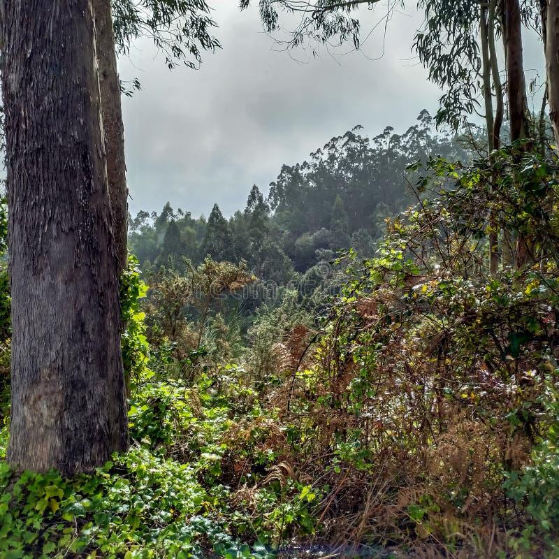 Δάσος Laurisilva στο νησί της Μαδέρας από το θυελλώδη καιρό στοκ φωτογραφίες
