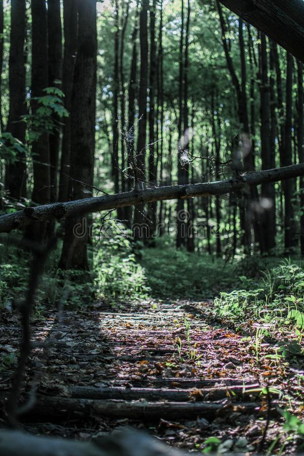 Δάσος Linden στοκ φωτογραφία με δικαίωμα ελεύθερης χρήσης
