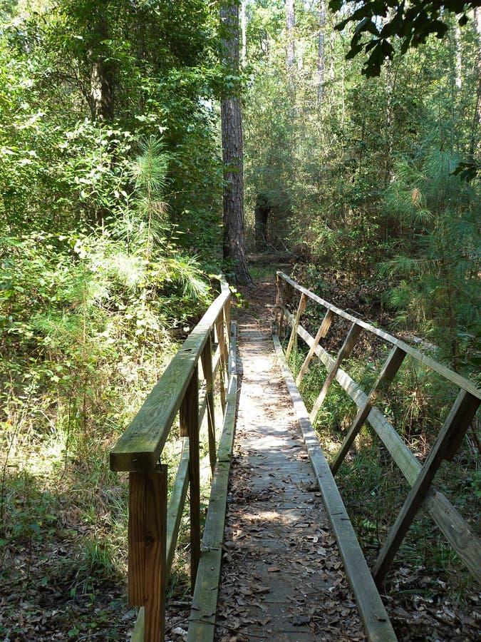 Δάσος Mississippian στοκ εικόνες με δικαίωμα ελεύθερης χρήσης