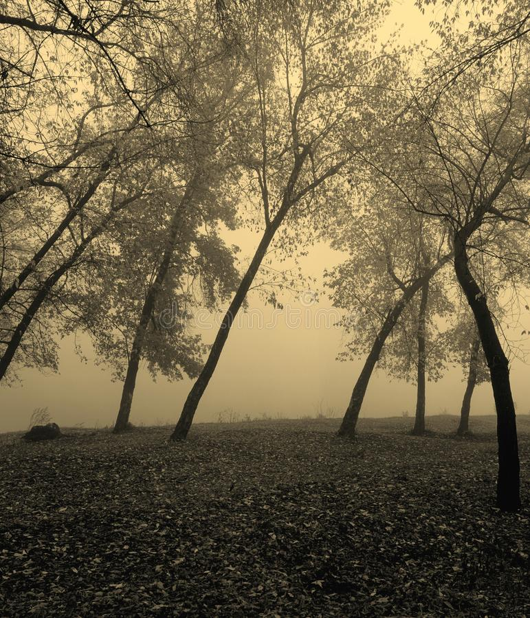 δάσος misty στοκ φωτογραφίες με δικαίωμα ελεύθερης χρήσης