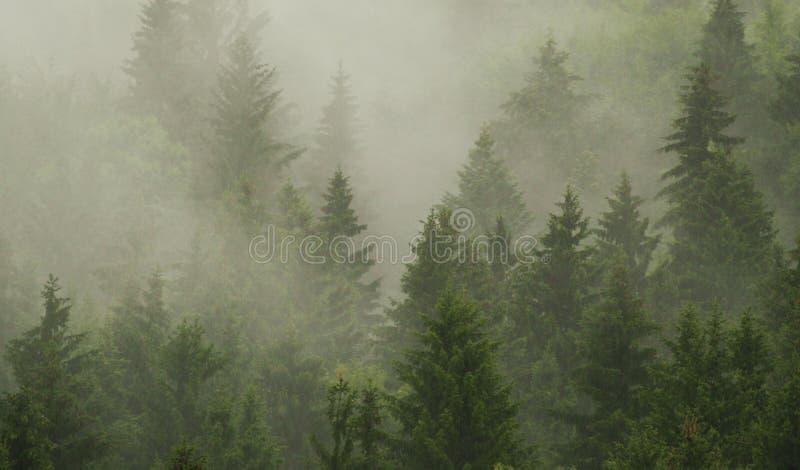 δάσος misty στοκ φωτογραφίες