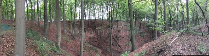Δάσος overvieuw στοκ εικόνες με δικαίωμα ελεύθερης χρήσης