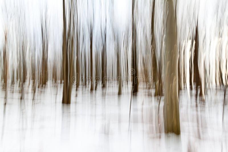 Δάσος Painterly στοκ εικόνες