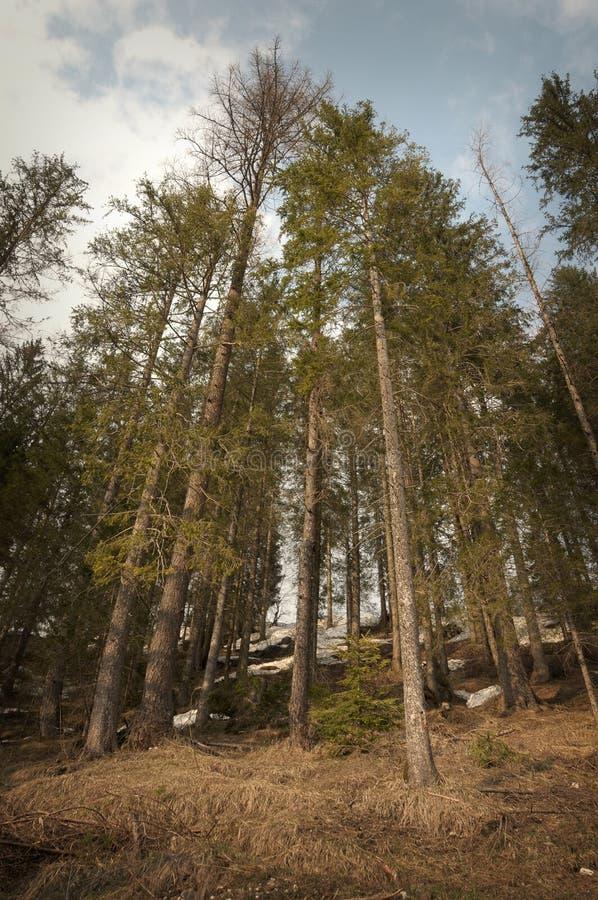 Download δάσος scary στοκ εικόνα. εικόνα από δάσος, ειδώλων, έννοια - 13178363