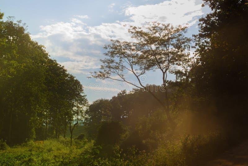 Δάσος Sunlights στοκ εικόνα