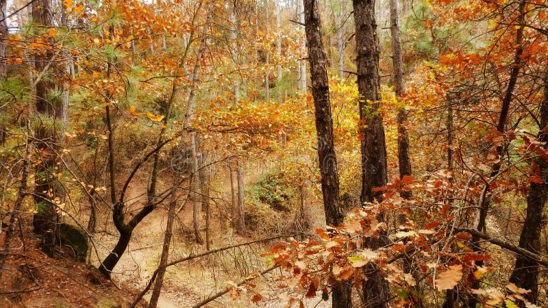 Δάσος Torregassa στοκ εικόνες