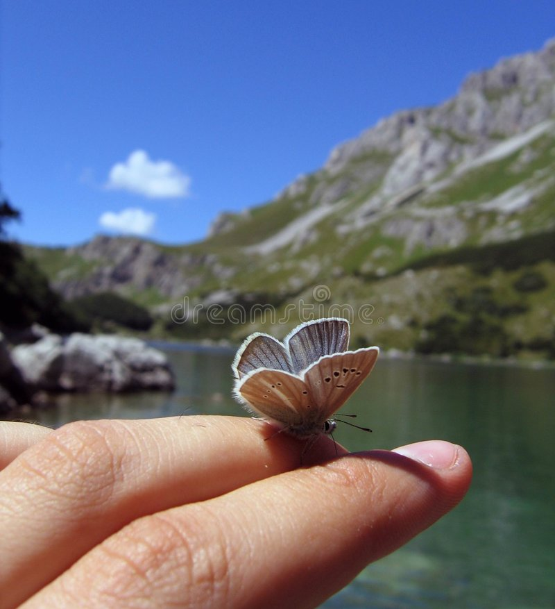 δάχτυλο πεταλούδων στοκ φωτογραφία με δικαίωμα ελεύθερης χρήσης