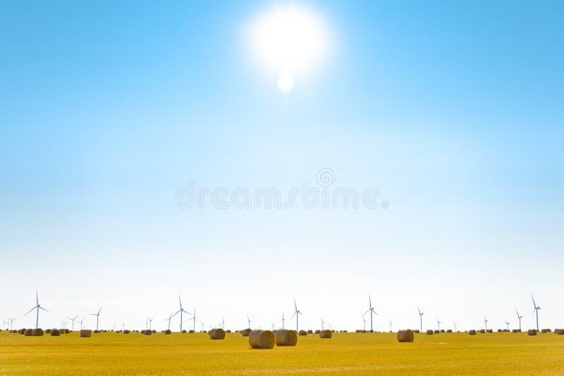 Δέματα αχύρου στο φωτεινό κίτρινο τομέα κάτω από το μπλε ουρανό Στρόβιλοι γεννητριών αέρα στο υπόβαθρο στοκ εικόνα