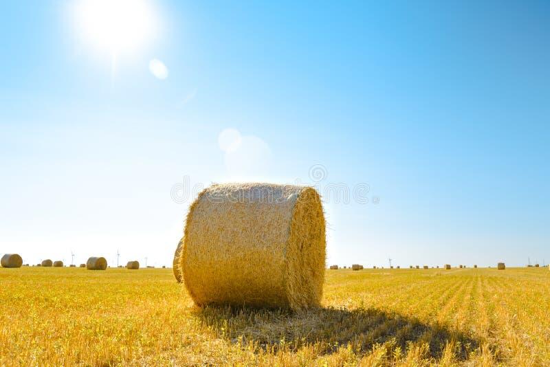 Δέματα αχύρου στο φωτεινό κίτρινο τομέα κάτω από το μπλε ουρανό στοκ φωτογραφία με δικαίωμα ελεύθερης χρήσης