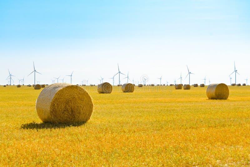 Δέματα αχύρου στο φωτεινό κίτρινο τομέα κάτω από το μπλε ουρανό Στρόβιλοι γεννητριών αέρα στο υπόβαθρο στοκ εικόνα με δικαίωμα ελεύθερης χρήσης