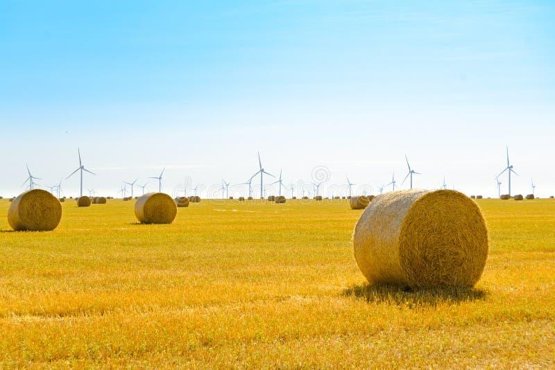 Δέματα αχύρου στο φωτεινό κίτρινο τομέα κάτω από το μπλε ουρανό Στρόβιλοι γεννητριών αέρα στο υπόβαθρο στοκ φωτογραφία