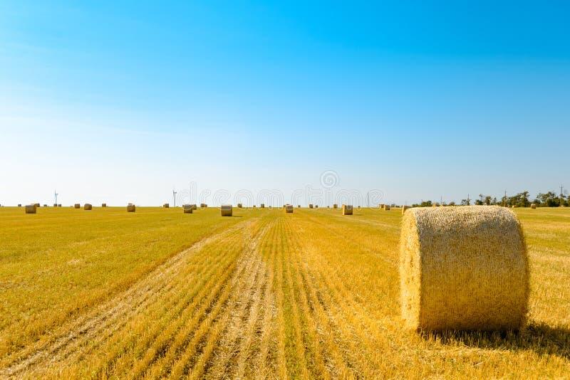 Δέματα αχύρου στο φωτεινό κίτρινο τομέα κάτω από το μπλε ουρανό Στρόβιλοι γεννητριών αέρα στο υπόβαθρο στοκ φωτογραφίες με δικαίωμα ελεύθερης χρήσης