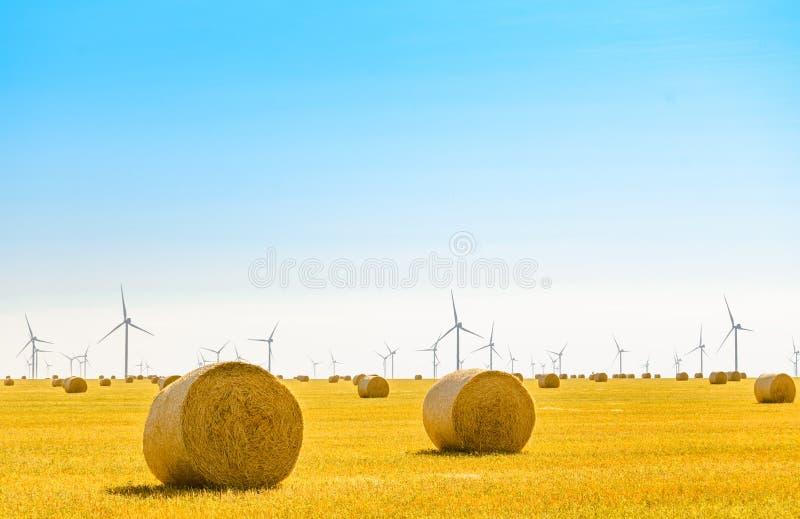 Δέματα αχύρου στο φωτεινό κίτρινο τομέα κάτω από το μπλε ουρανό Στρόβιλοι γεννητριών αέρα στο υπόβαθρο στοκ εικόνες