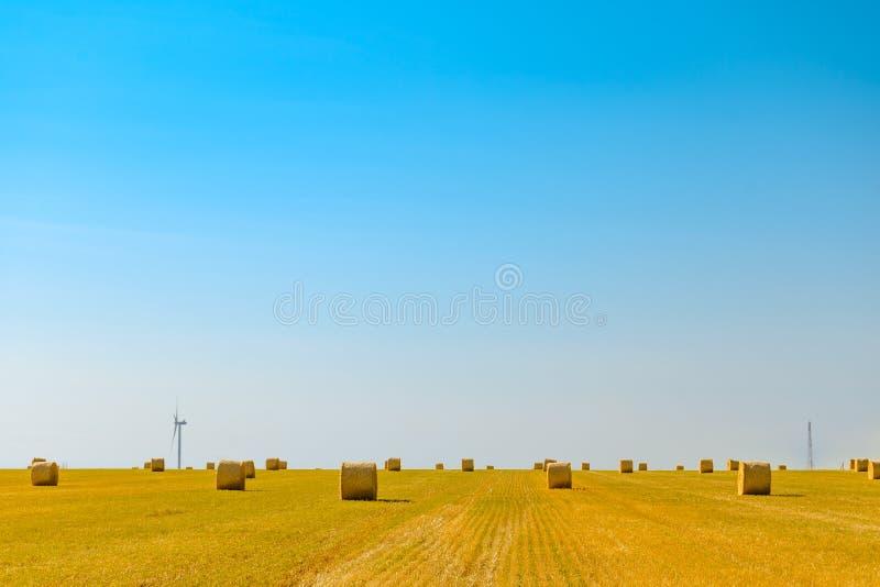 Δέματα αχύρου στο φωτεινό κίτρινο τομέα κάτω από το μπλε ουρανό Στρόβιλοι γεννητριών αέρα στο υπόβαθρο στοκ φωτογραφία με δικαίωμα ελεύθερης χρήσης