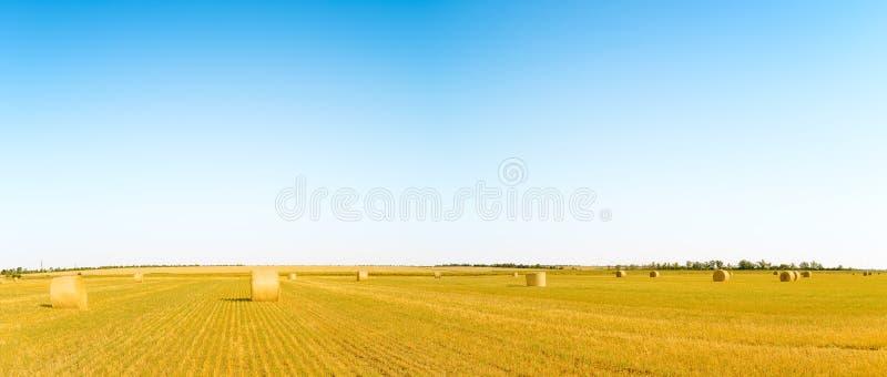 Δέματα αχύρου στο φωτεινό κίτρινο τομέα κάτω από το μπλε ουρανό στοκ εικόνα