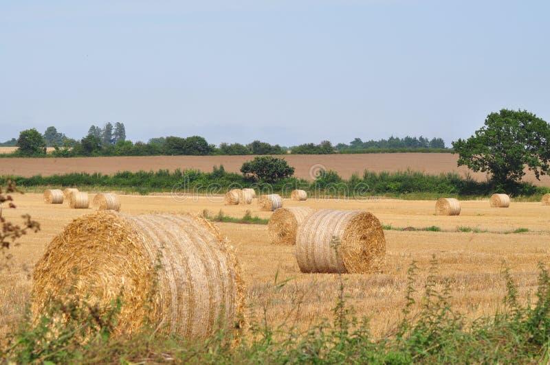 Δέματα σανού σε έναν τομέα Norfolk στοκ εικόνα με δικαίωμα ελεύθερης χρήσης