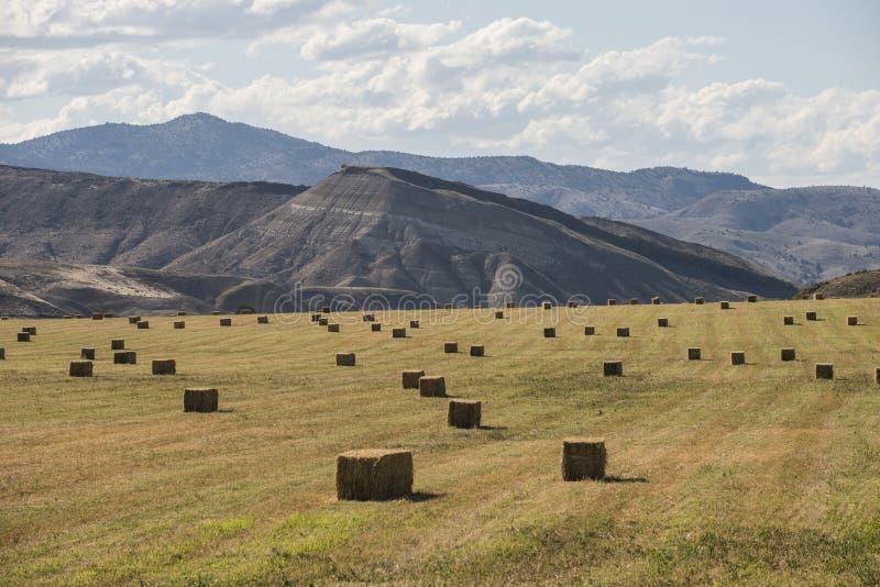 Δέματα του σανού στο καλλιεργήσιμο έδαφος, κεντρικό Όρεγκον, ΗΠΑ στοκ φωτογραφία με δικαίωμα ελεύθερης χρήσης