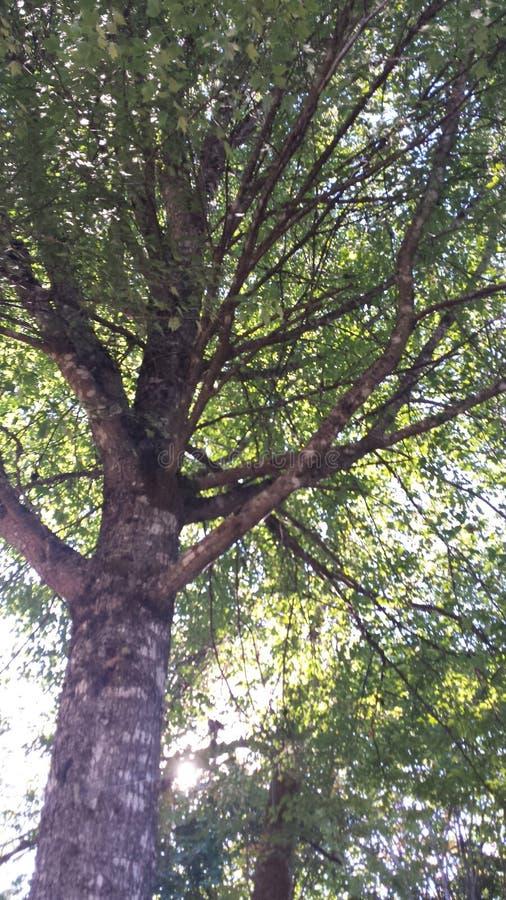 Δένδρα στοκ φωτογραφίες με δικαίωμα ελεύθερης χρήσης
