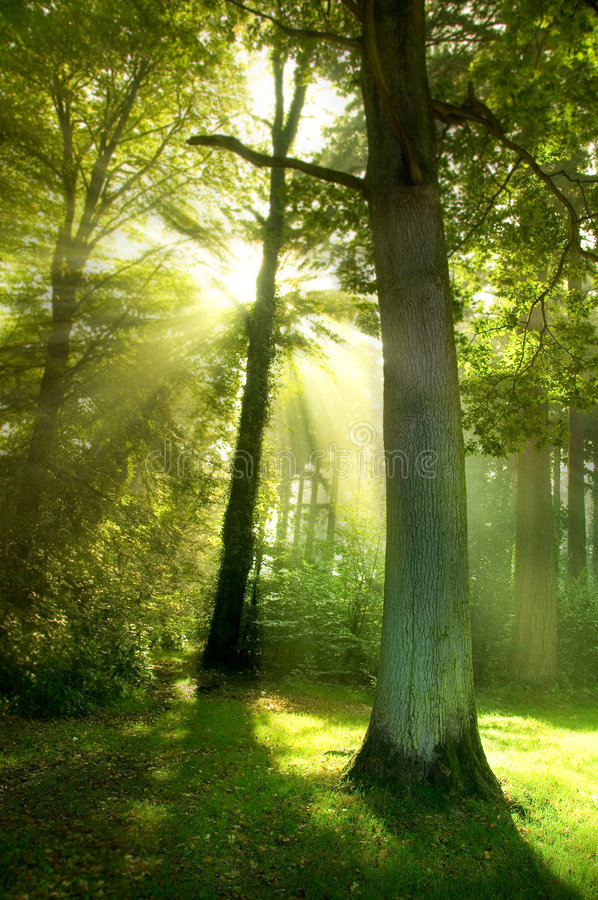 δέντρα ήλιων ακτίνων στοκ φωτογραφία με δικαίωμα ελεύθερης χρήσης