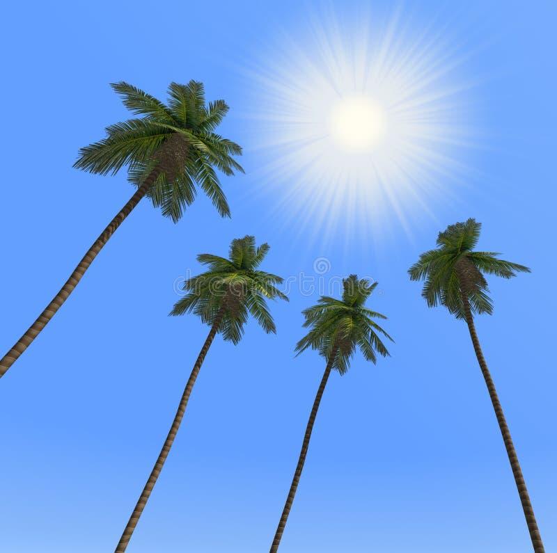δέντρα ήλιων φοινικών ελεύθερη απεικόνιση δικαιώματος