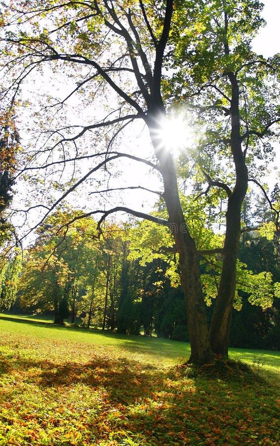 Download δέντρα ήλιων στοκ εικόνες. εικόνα από picnic, δάσος, πυράκτωση - 13178410