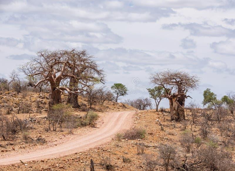 Δέντρα αδανσωνιών από το δρόμο στοκ εικόνες με δικαίωμα ελεύθερης χρήσης