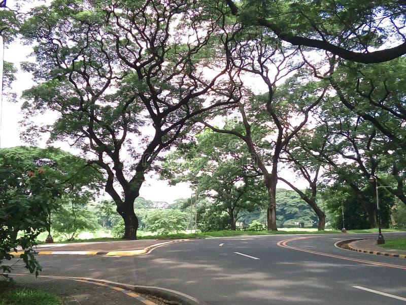 Δέντρα ακακιών σε ΕΠΑΝΩ Diliman στοκ φωτογραφία