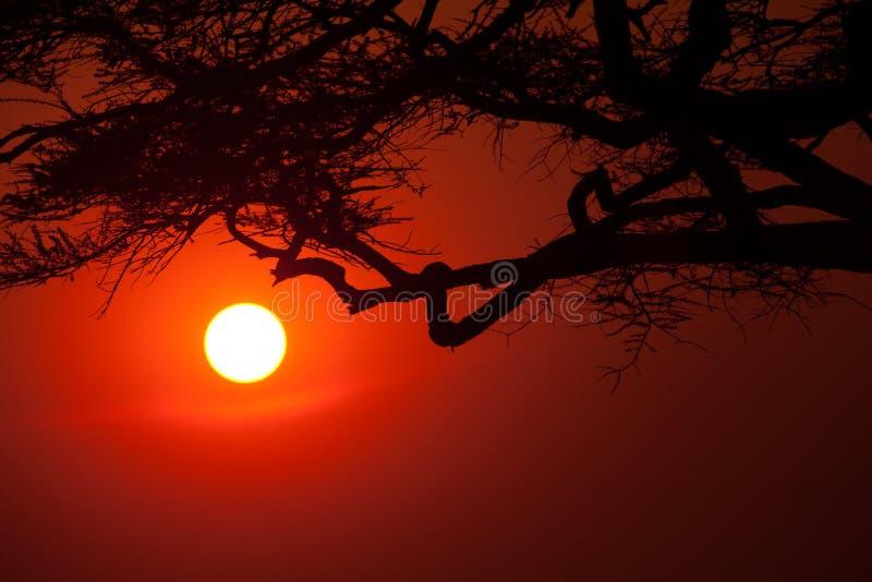 δέντρα ακακιών στοκ φωτογραφία με δικαίωμα ελεύθερης χρήσης