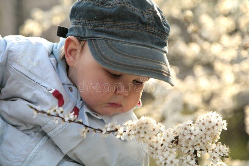 δέντρα ανθισμάτων παιδιών κ&lam στοκ φωτογραφίες με δικαίωμα ελεύθερης χρήσης