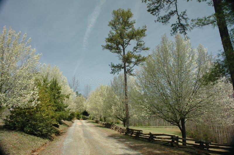 Δέντρα αχλαδιών που ανθίζουν στα μπλε βουνά κορυφογραμμών στοκ φωτογραφία με δικαίωμα ελεύθερης χρήσης