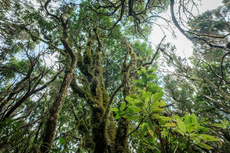 Δέντρα δαφνών μέσα στο παχύ δάσος, τροπικό δάσος στοκ εικόνες