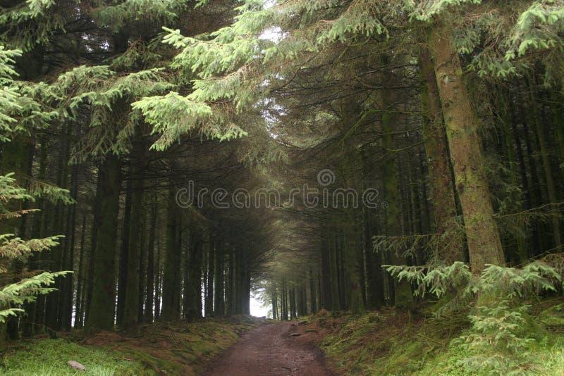 δέντρα διαδρόμων στοκ φωτογραφία με δικαίωμα ελεύθερης χρήσης