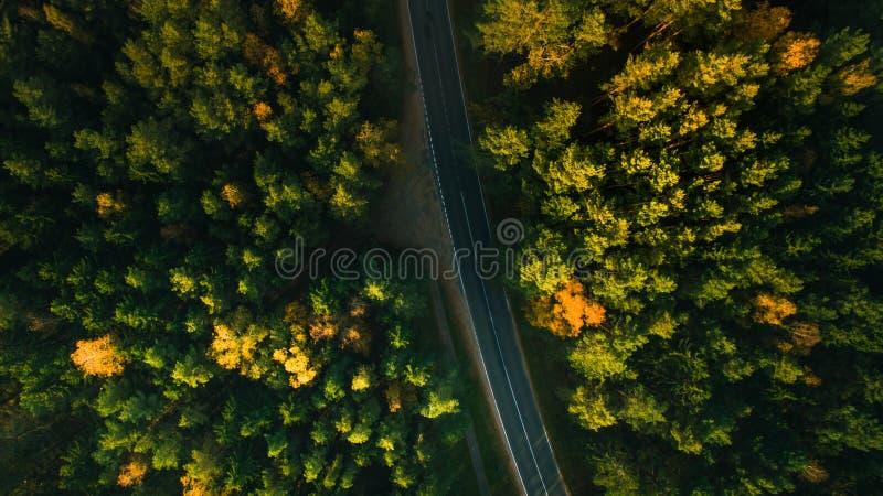 Δέντρα δρόμων και φθινοπώρου βουνών επάνω από τη δασική κίτρινη, κόκκινη και πράσινη φύση, υψηλή τοπ άποψη Εναέριος βλαστός κηφήν στοκ φωτογραφία με δικαίωμα ελεύθερης χρήσης