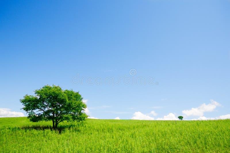 δέντρα δύο στοκ εικόνες