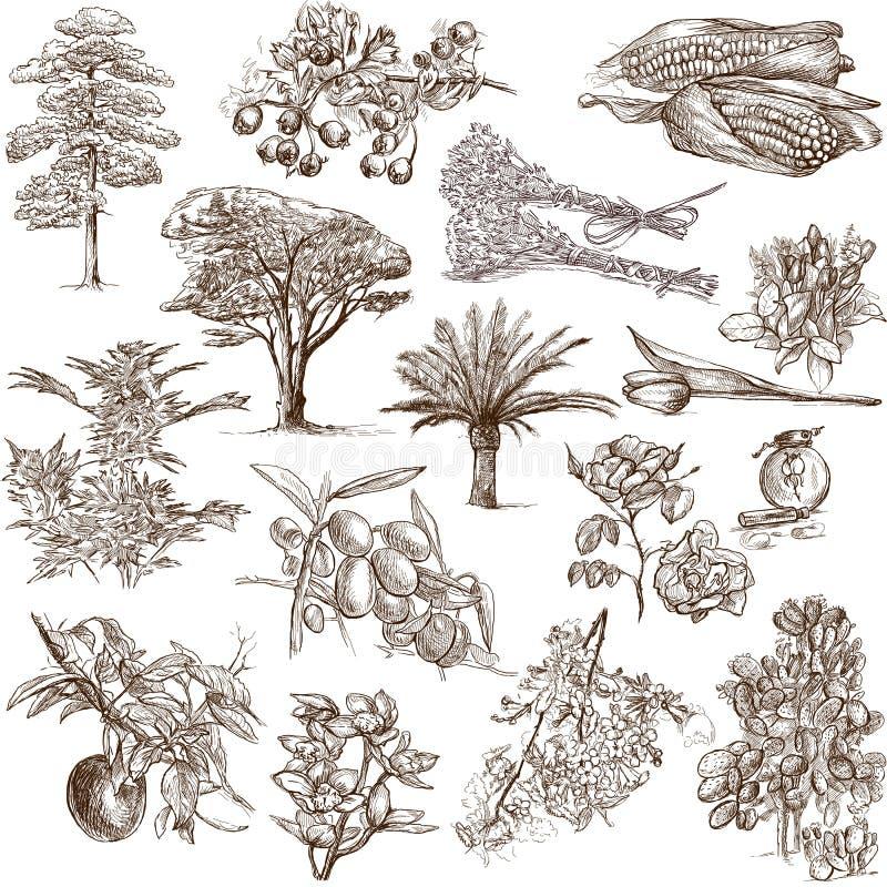 Δέντρα, εγκαταστάσεις και λουλούδια ελεύθερη απεικόνιση δικαιώματος