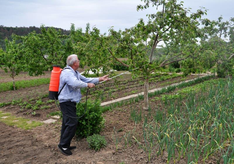 Δέντρα επεξεργασίας στον κήπο από τα παράσιτα στοκ φωτογραφίες