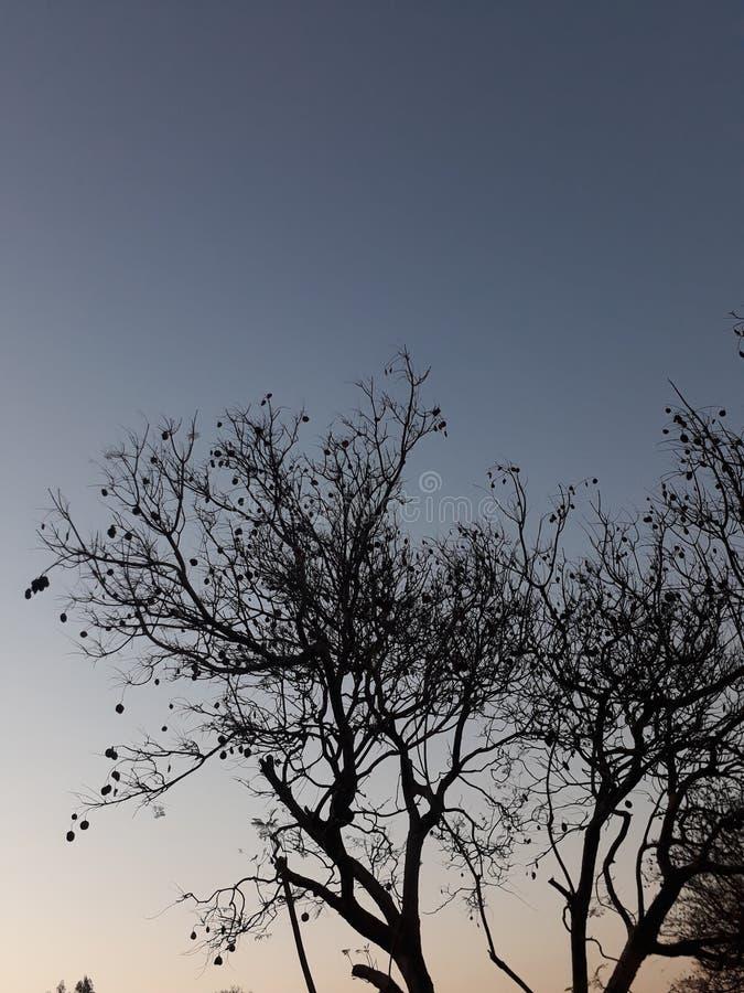 Δέντρα επιβίωσης στοκ εικόνες με δικαίωμα ελεύθερης χρήσης