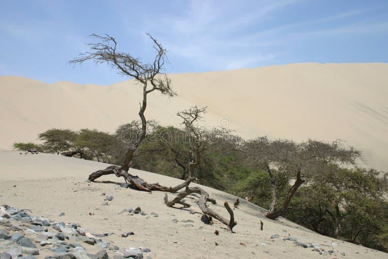 δέντρα ερήμων στοκ εικόνες με δικαίωμα ελεύθερης χρήσης