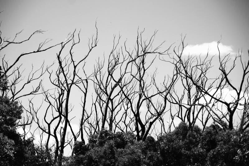 Δέντρα λιμνών βασιλιάδων στοκ φωτογραφίες με δικαίωμα ελεύθερης χρήσης